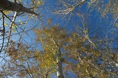 Le ciel ne devrait pas être la limite photographie stock libre de droits