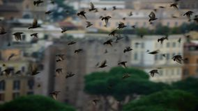 Le ciel remplit d'un million d'étourneaux effarante Décembre à Rome images libres de droits