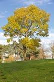 Le cimetière national de Willamette fond l'Orégon photos libres de droits