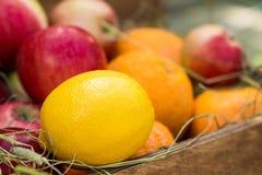 Le citron dans la corbeille de fruits Photographie stock