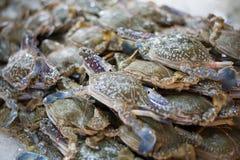 Le client frais de crabe bleu choisissent la matière première  photo libre de droits