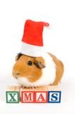 Le cobaye utilise le chapeau de Noël photographie stock libre de droits