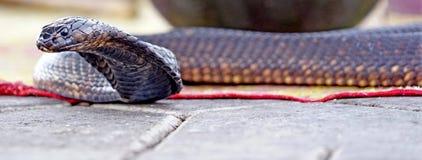 Le cobra attendant à Marrakech Photos stock