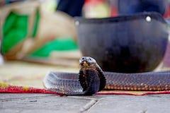 Le cobra attendant à Marrakech Images libres de droits