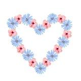 Le coeur creux formé composé de fleurs de chicorée et de ketmie, est Photos libres de droits