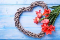 Le coeur décoratif et les tulipes aromatiques de ressort fleurit sur le pai bleu Images libres de droits