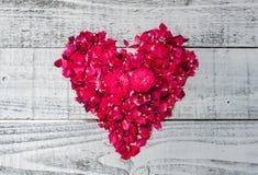 Le coeur d'amour et a monté Photos stock