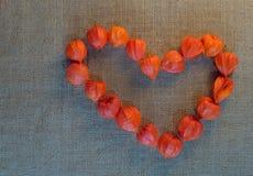 Le coeur de découpe fleurit le coqueret comestible Photos libres de droits
