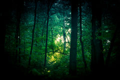 Le coeur de la forêt Image libre de droits