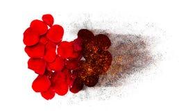 Le coeur des pétales de rose rouges brûle à la cendre noire Photos libres de droits