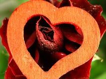 Le coeur et a monté avec des baisses de rosée sur les pétales Photo libre de droits