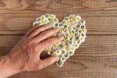 Le coeur fait de marguerites fleurit à l'arrière-plan en bois, couvert par a Photographie stock
