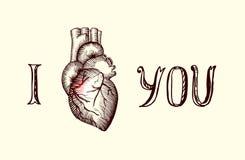 Le coeur humain Images libres de droits