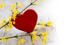 Le coeur rouge avec le forsythia sur le bois lumineux a brouillé au blanc, amour Image stock