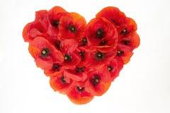 Le coeur rouge avec le pavot de floraison fleurit sur un fond blanc photo stock