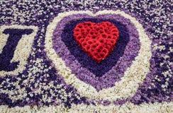 Le coeur rouge et le fond abstrait avec les jacinthes colorées fleurit au défilé traditionnel Bloemencorso de fleurs de Noordwijk Photo stock