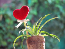 Le coeur rouge fait de serviette, bâton avec le crayon, ruban de lien et ananas de nain dans le vase a formé la botte Photographie stock libre de droits