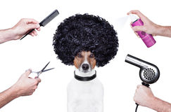 Le coiffeur scissors le jet de crabot de peigne Images stock