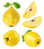 Le coing porte des fruits collection image libre de droits