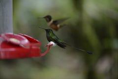 Le colibri alimentant du conducteur rouge photographie stock libre de droits
