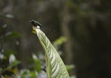 Le colibri se reposant sur l'arbre photo libre de droits