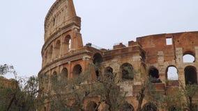 Le Colisé à Rome Dans le premier plan il y a les oliviers clips vidéos