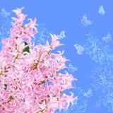 Le collage de la jacinthe et des papillons roses de couleurs Photos stock
