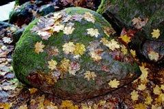 Le collage de la nature, parc d'état de lac battle Ground, Lewisville, WA, Etats-Unis photos libres de droits