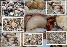 Le collage des coquilles a lavé sur le rivage arénacé à la plage de Hutt près de l'Australie occidentale de Bunbury Photo libre de droits
