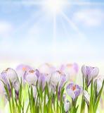 Belles fleurs de ressort Image libre de droits