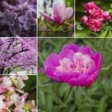 le collage fleurit la source Fleur rose et violette dans le printemps Photo libre de droits