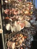 Le collane fatte dalle conchiglie su un mercato del ricordo si bloccano Immagine Stock Libera da Diritti