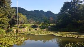 Le colline della piantagione di tè di Hangzhou fotografia stock