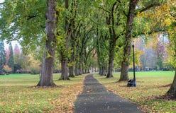 Le colonne degli alberi di olmo giganti hanno sparso le loro foglie sul percorso pavimentato sul lo immagine stock