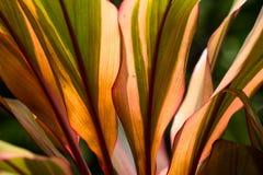 Le coloré des feuilles en nature Feuilles stupéfiantes, nature créative, Thaïlande Images stock