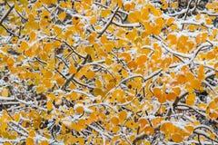 Le Colorado Autumn Scenery Photo stock