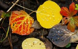 Le Colorado Fall-12 3558 Photos stock
