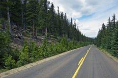 Le Colorado Forest Road photo stock