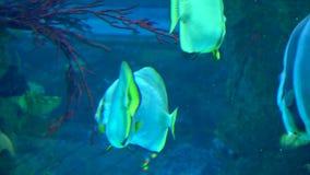 Le colourfull d'aquarium p?che dans l'eau bleue profonde fonc?e clips vidéos