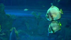 Le colourfull d'aquarium p?che dans l'eau bleue profonde fonc?e banque de vidéos