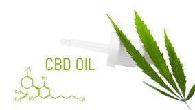 Le compte-gouttes avec le cannabis d'huile de CBD a isolé feuille verte de chanvre Concept médical de marijuana image stock