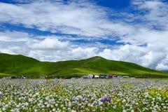 Le comté de Hongyuan de ville de port de marina dans l'étang en bois d'Aba Russian de province de Sichuan fleurit Photo stock