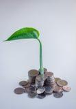 Le concept d'argent avec l'arbre croissant avec des pièces de monnaie dominent jpg Photographie stock
