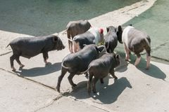 Le concept de biologique, santé animale, amitié, amour de nature photos libres de droits