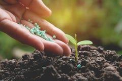 Le concept de jeune plante par la main humaine appliquent l'arbre de jeunes d'engrais Photographie stock