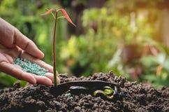 Le concept de jeune plante par la main humaine appliquent l'arbre de jeunes d'engrais Image libre de droits