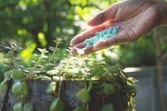 Le concept de jeune plante par la main humaine appliquent l'arbre de jeunes d'engrais Image stock