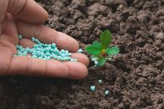 Le concept de jeune plante par la main humaine appliquent l'engrais Photos stock