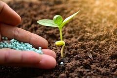 Le concept de jeune plante par la main humaine appliquent le jeune arbre d'engrais plus de Images stock