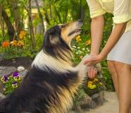 Le concept de l'amitié et de l'amour pour des animaux Photos libres de droits